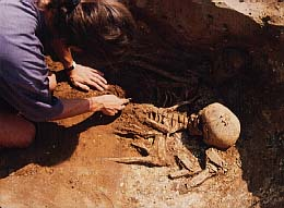 Excavating a skeleton